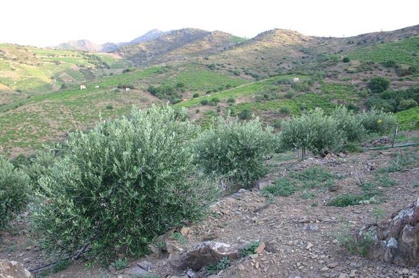 Les plantations